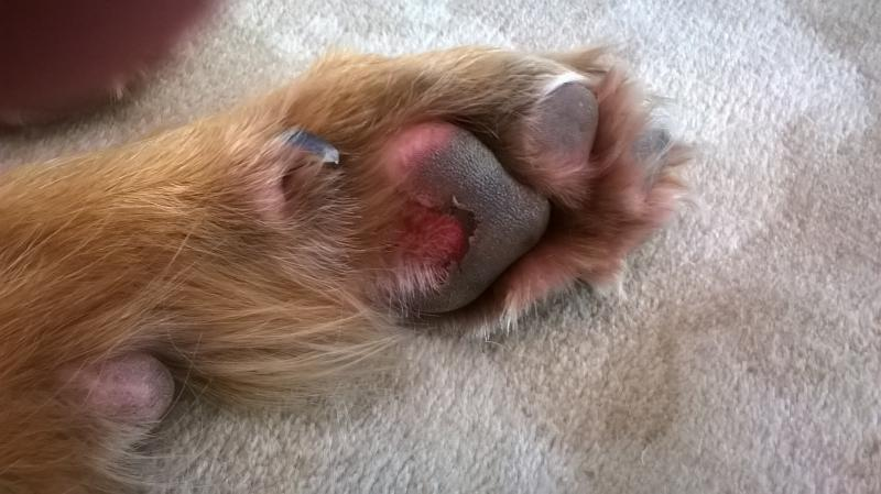 How  Clean An Infected Cat Foot
