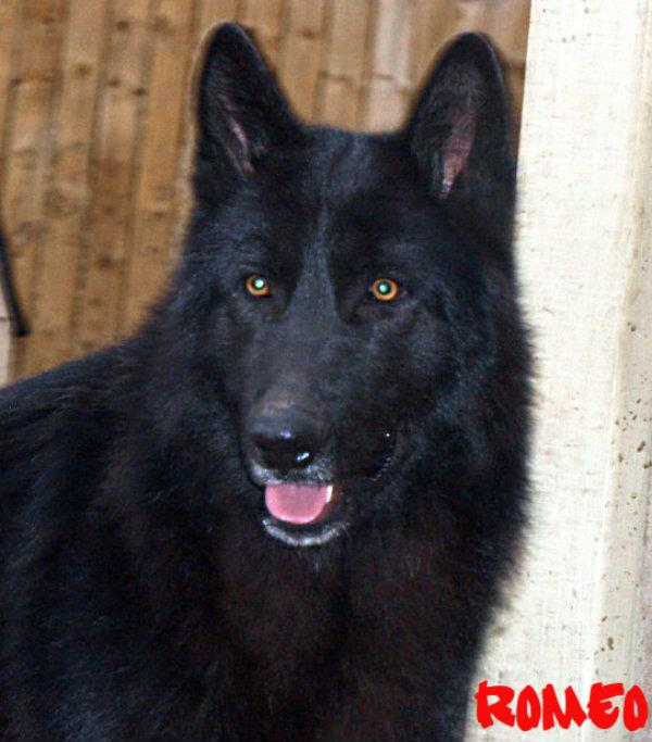 A couple of updated pics from my pack-yearling.jpg