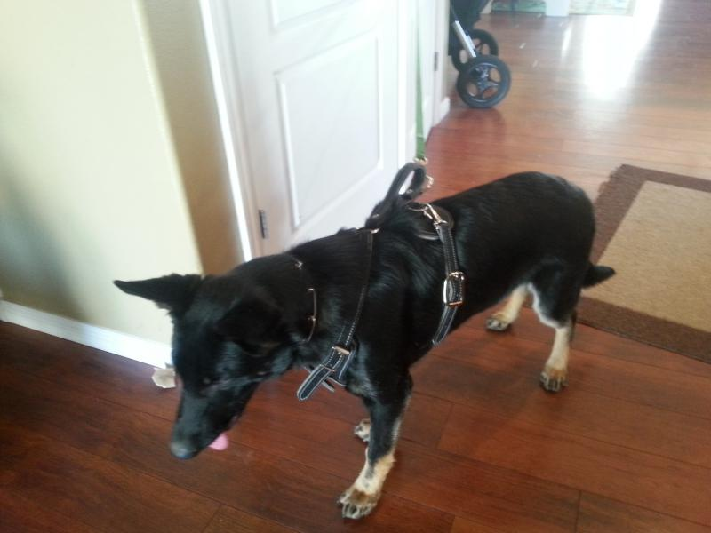 In the market for a harness?-yo-harness-4.jpg