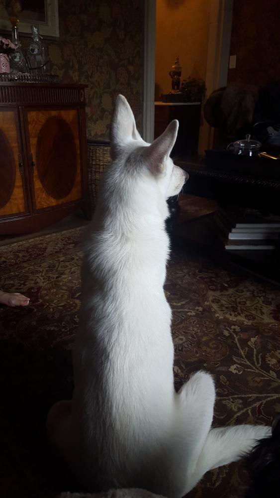 Is My Dog a Good Size?-yska-sitting-2.jpg
