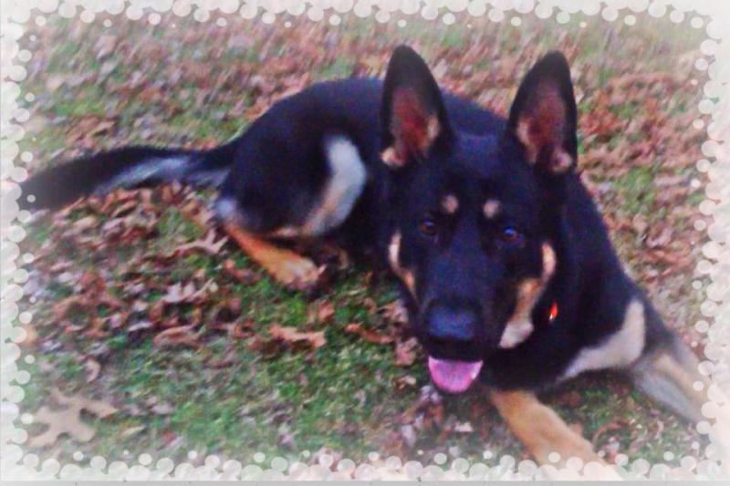 More Pics Of Big Boy Zeus.-zeus19.jpg