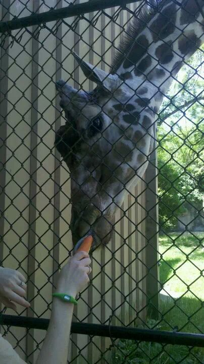 Pics & Videos from Days Working at the Zoo-zoo-2.jpg