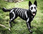 skeleton-dog-halloween-costume-non-toxic-pet-paint-5.jpg