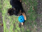 Gracie with Ball First Day Home.jpg