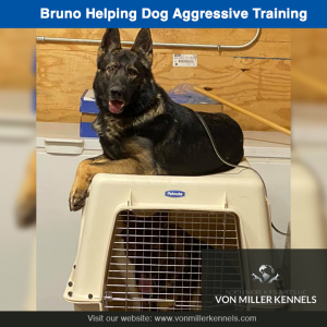 Jan 25 Bruno helping out with a dog aggressive board and train , job well done 👍🏻-insta.png