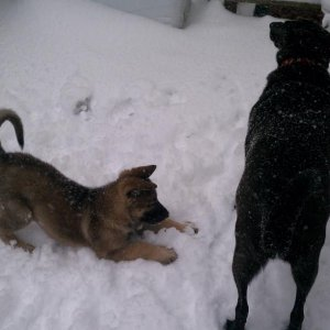 Nina loved her April Fool's snow day, but Molly not so much! 04/01/11